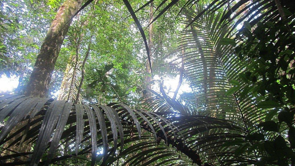 Forêt sur la route de Kaw