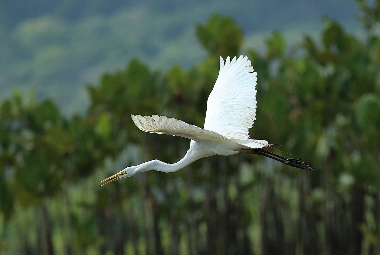 Aigrette blanche - Photo Michel et Géraldine RENARD